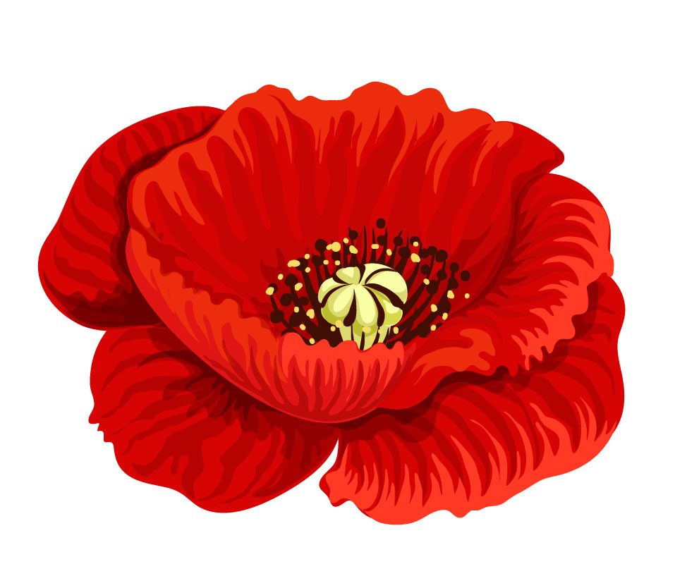 Poppy-vectorstock_20646017